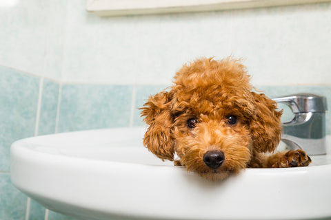 Essential tips for a tail wagging dog grooming experience would the same advice apply when bath time rolls around yes exercise your dog before bath time if you bathe your dog in your bathtub bring him or her solutioingenieria Images