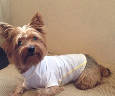 solardogz dog rash guard - yorkie