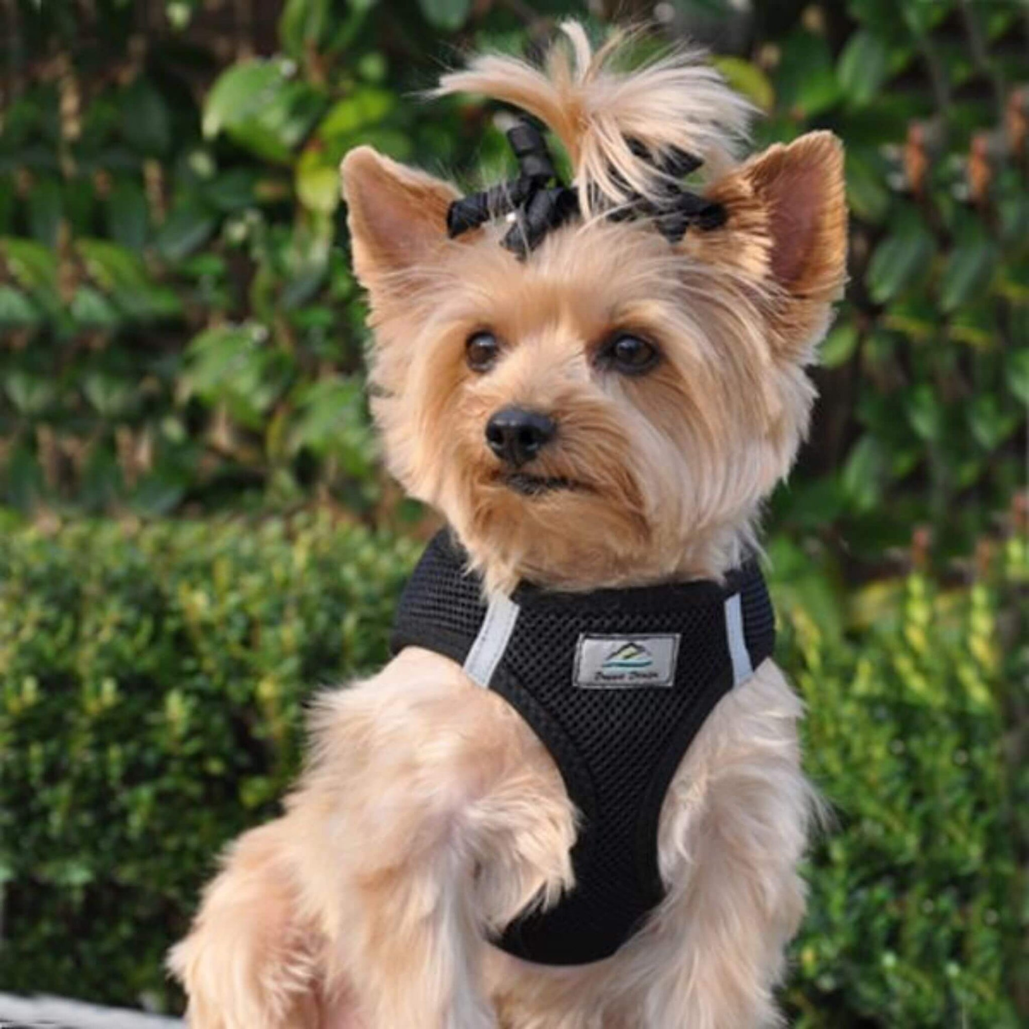 american river step in dog harness - black - yorkie