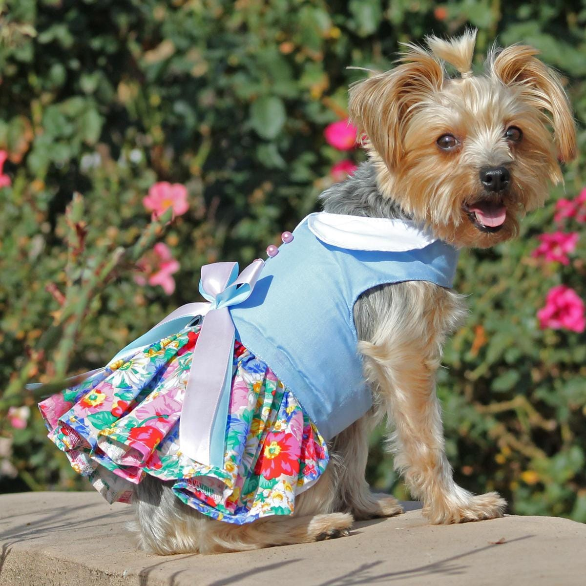 Blue and White Pastel Pearls Floral Dog Dress on a yorkie