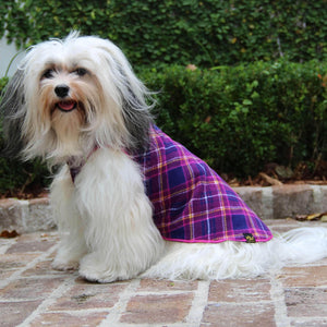 Gold Paw Stretch Fleece For Small Dogs - Mulberry Plaid - Havanese