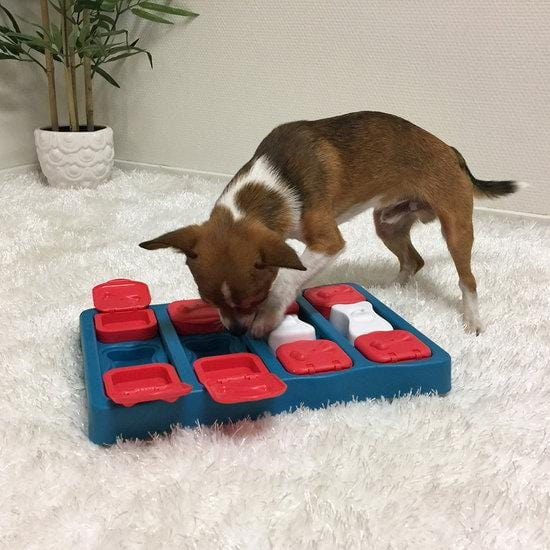 Nina Ottosson Dog Brick Treat Dispensing Dog Toy - model