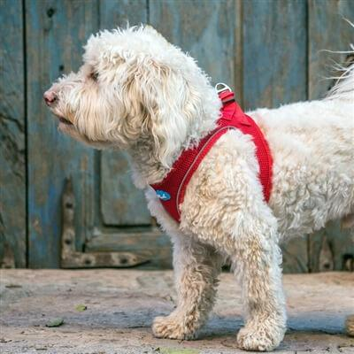 Plush Step In Dog Harness - Red - Dog