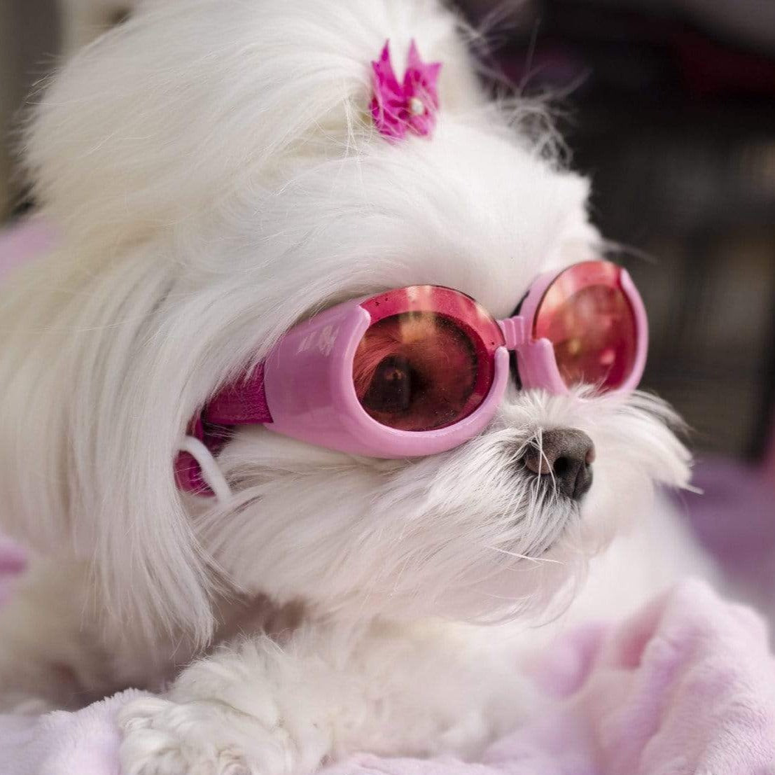 Doggles - Pink on model