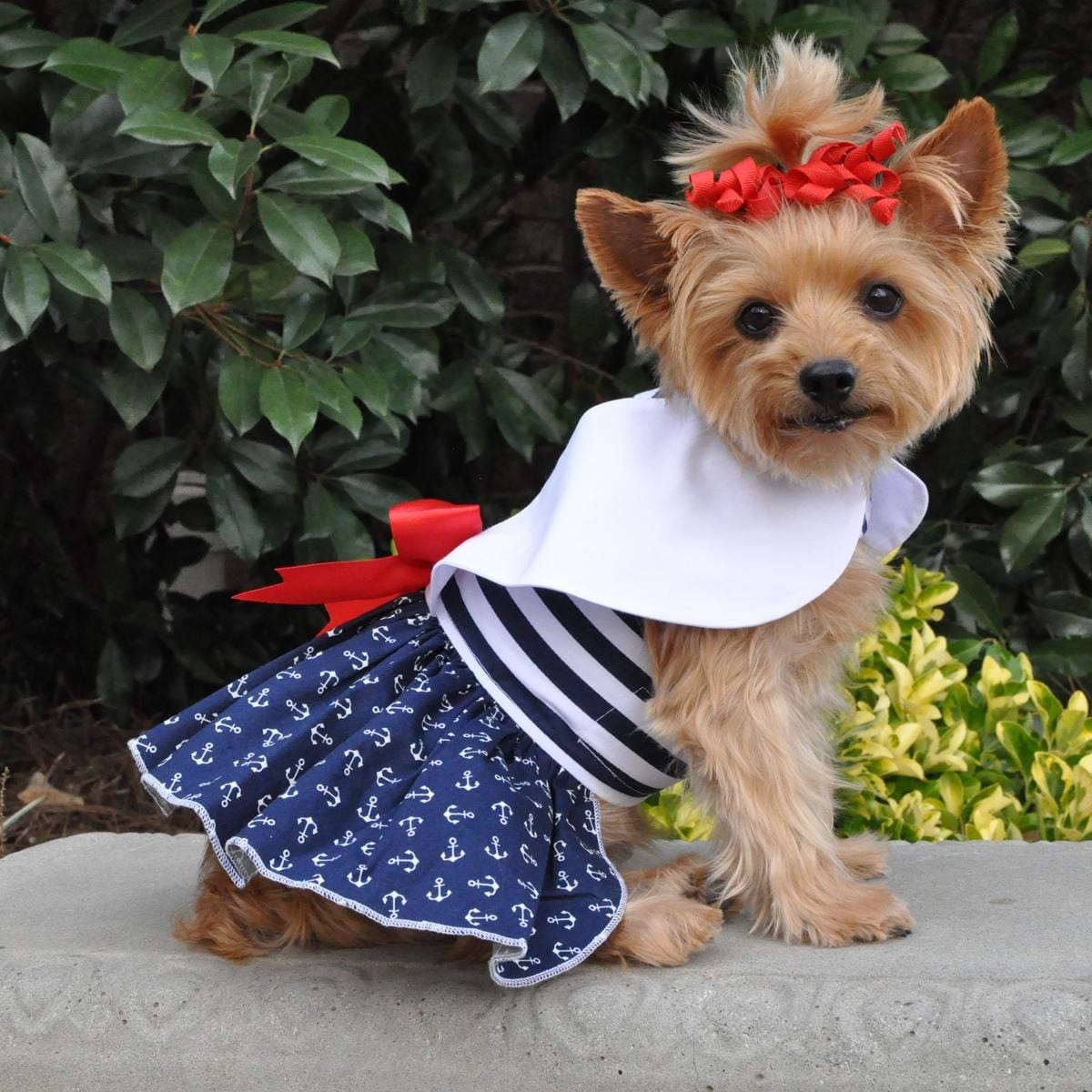 Nautical Dog Dress on a Yorkie