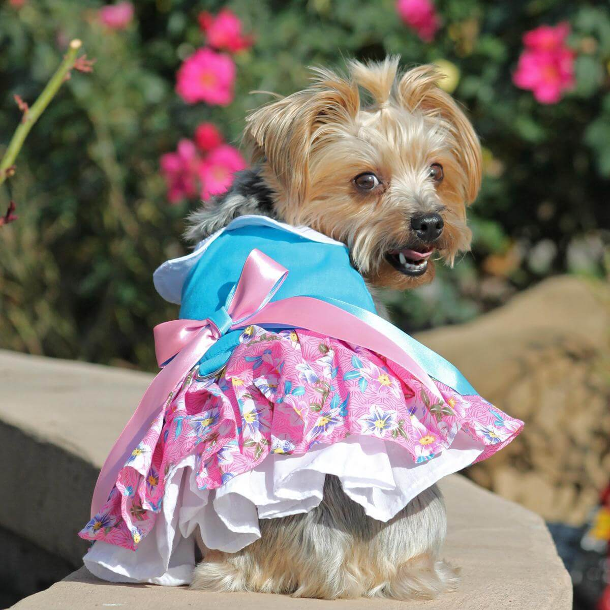 pink and blue plumeria dog dress on a yorkie