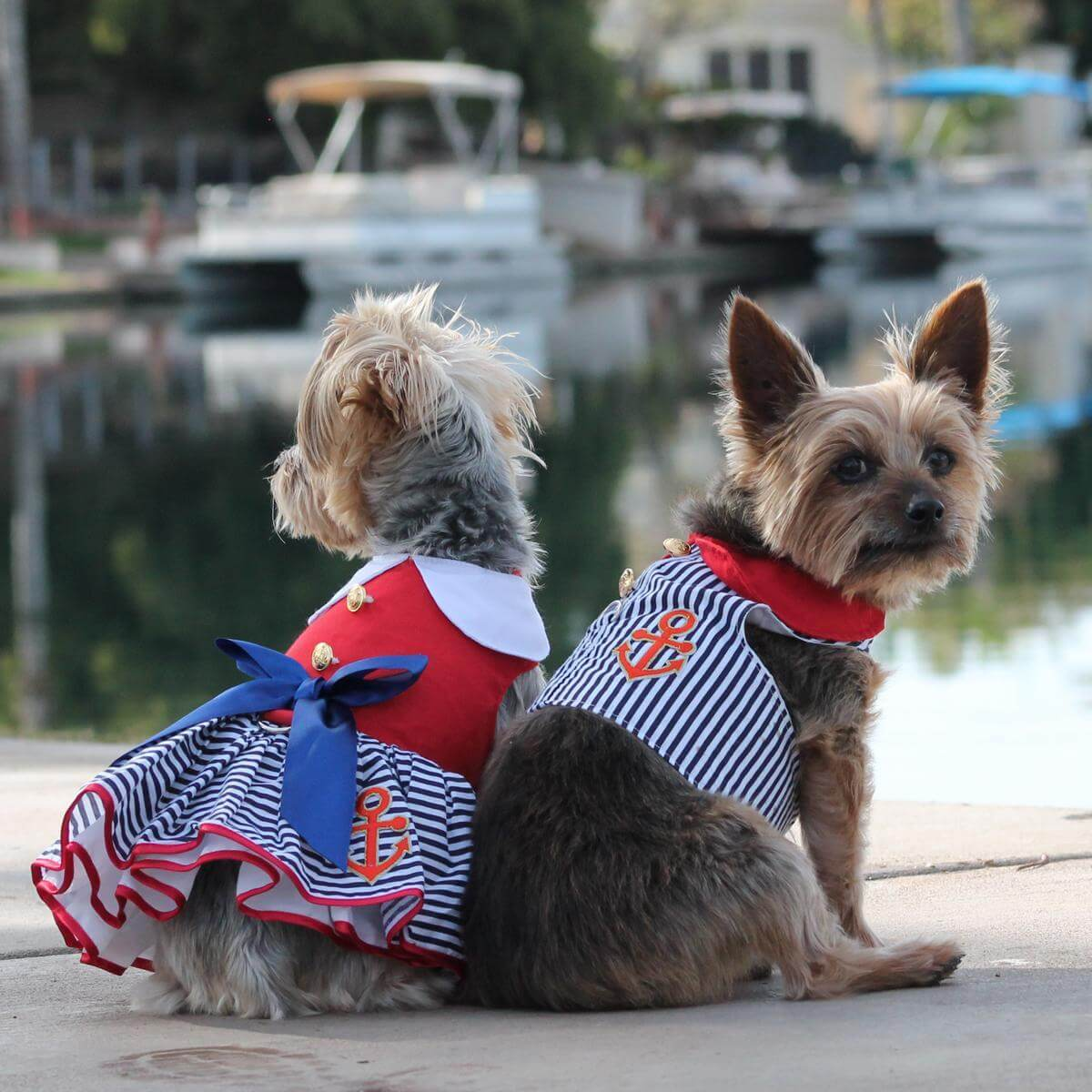 sailor girl dog dress on a yorkie