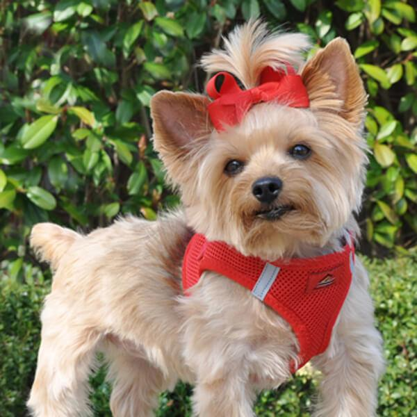 american river step in dog harness - red - yorkie