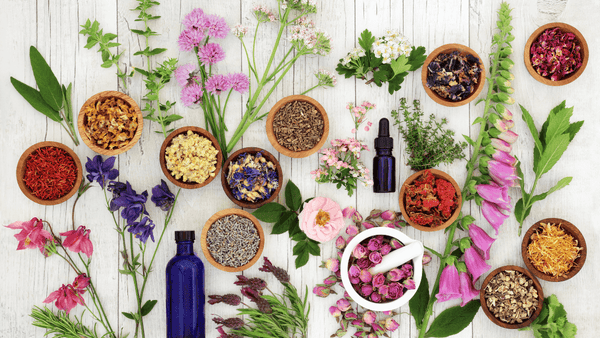Why are herbal medicines so important
