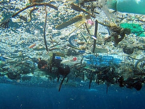 Four Things You Can Do To Prevent The Growth Of The Great Pacific Garbage Patch