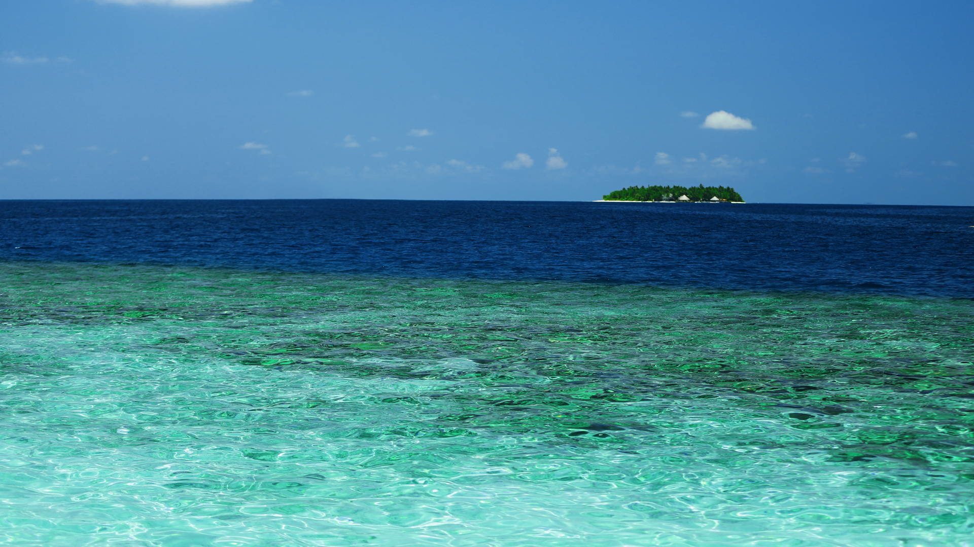Colors of the Ocean: Why Are Some Oceans Blue and Others Green?