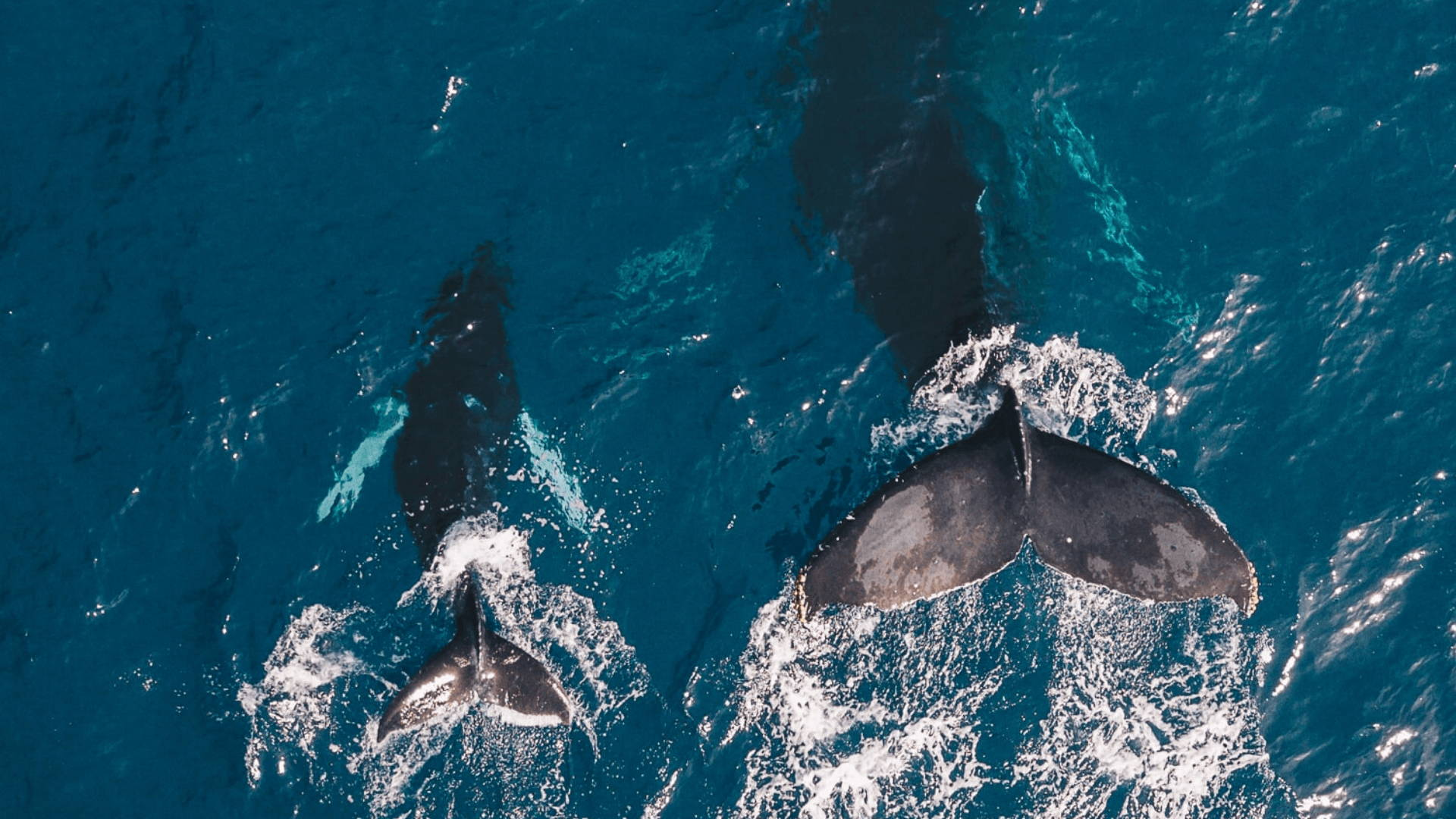 Why Whales are Important to the Ocean