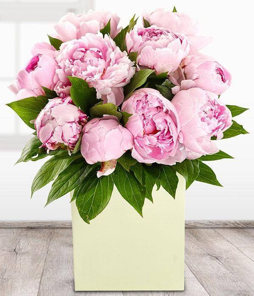 Aqua Pack - Perfect Peonies