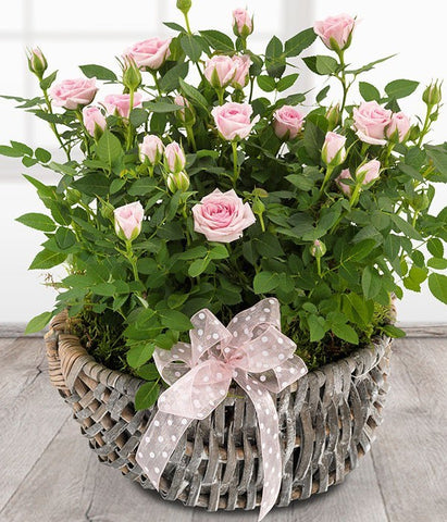 Basket - Rose Basket