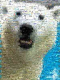 Amazing Polar Bear Wild Animals Montage Limited Edition , Polar Bears - n/a, Final Score Products  - 1