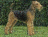Amazing Airedale Terrier Dog Montage 1 of only 25 w/COA , Airedale Terrier - n/a, Final Score Products  - 1