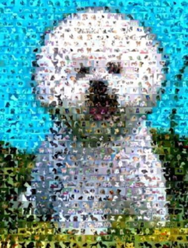Amazing Bichon Frise Dog Montage LIMITED EDITION w/COA , Bichon Frise - n/a, Final Score Products  - 1
