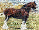 Amazing Clydesdale Horse Montage Limited Edition w/COA , Other - n/a, Final Score Products  - 1