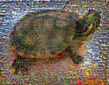 Amazing Sea or land Turtle Wild Animals Montage print , Turtles - n/a, Final Score Products  - 1