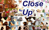 Basset Hound Dog Mosaic Print Limited Edition , Posters, Prints & Pictures - Artist Paul Van Scott, Final Score Products  - 2