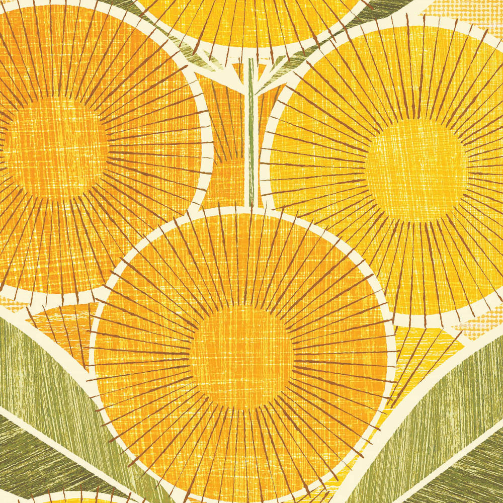 Australian Golden Wattle colour print closeup