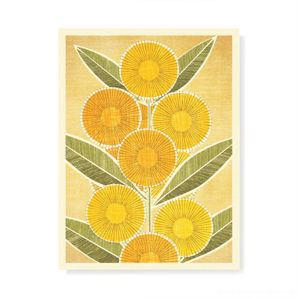 Australian Golden Wattle colour print