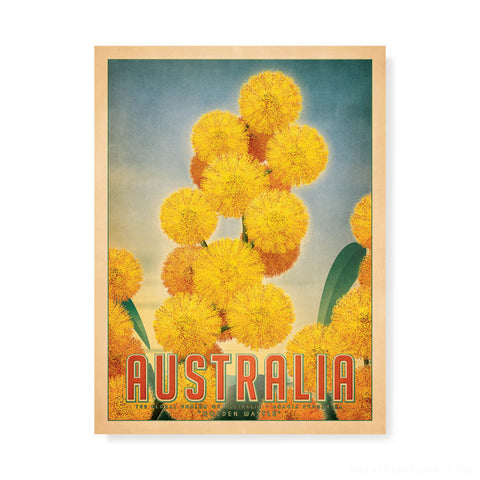 Australian Golden Wattle Print