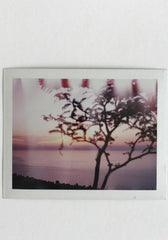 Mark Borthwick, Polaroid *signed