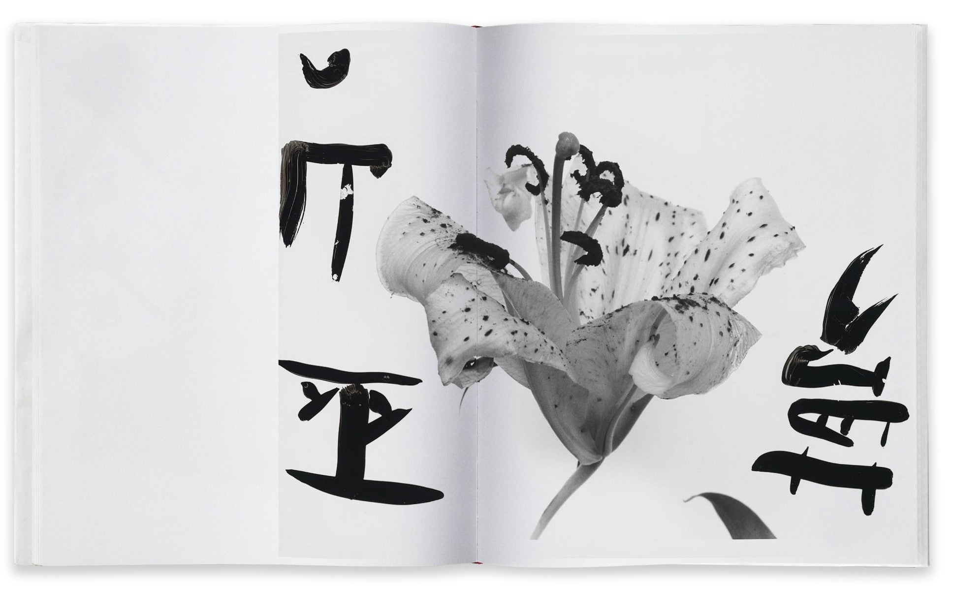 Nobuyoshi Araki, Marvelous Tales of Black Ink