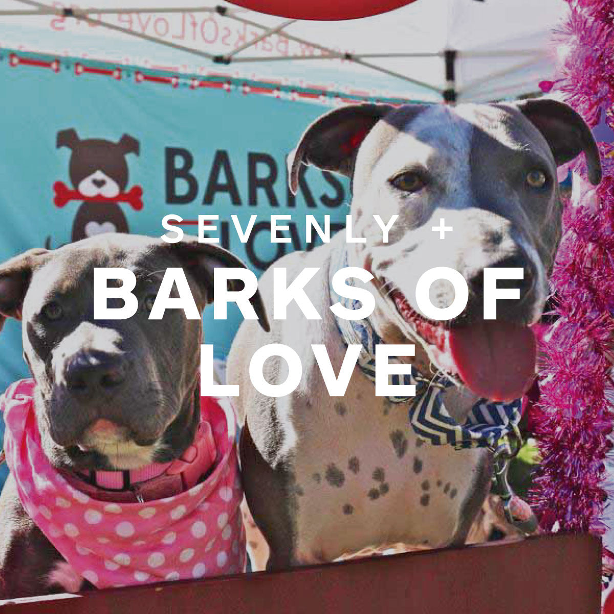 Barks Of Love