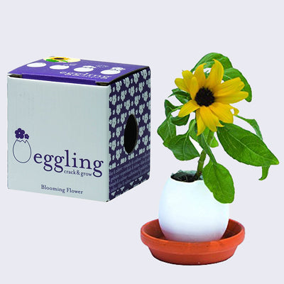 Eggling - Sunflower