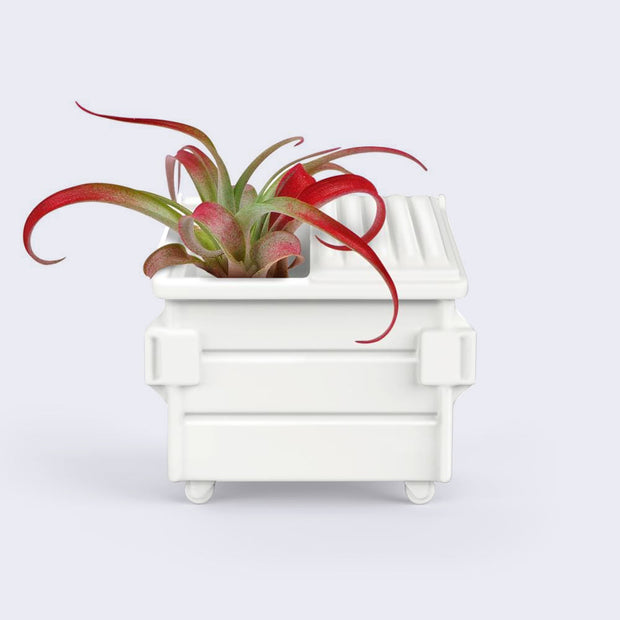 Fancy Plants -  Dumpster Air Plant Holder