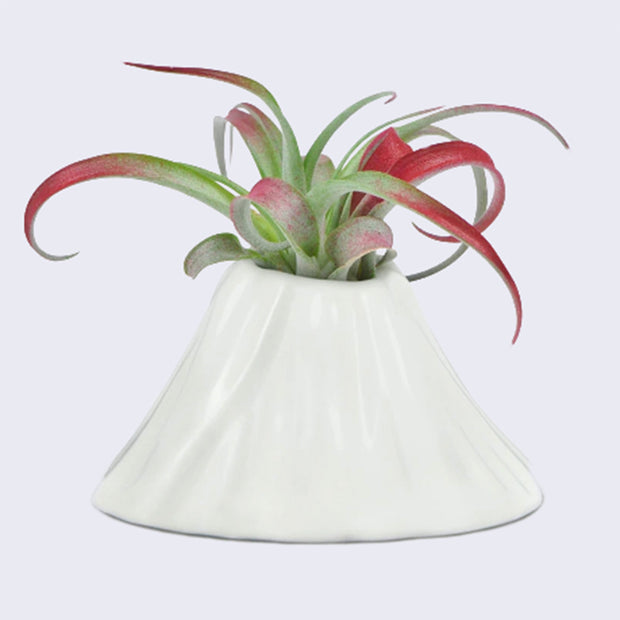 Fancy Plants -  Volcano Air Plant Holder