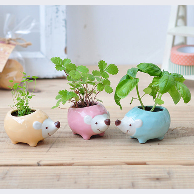 Hedgie Green Hedgehog Growing Kit (Assorted)