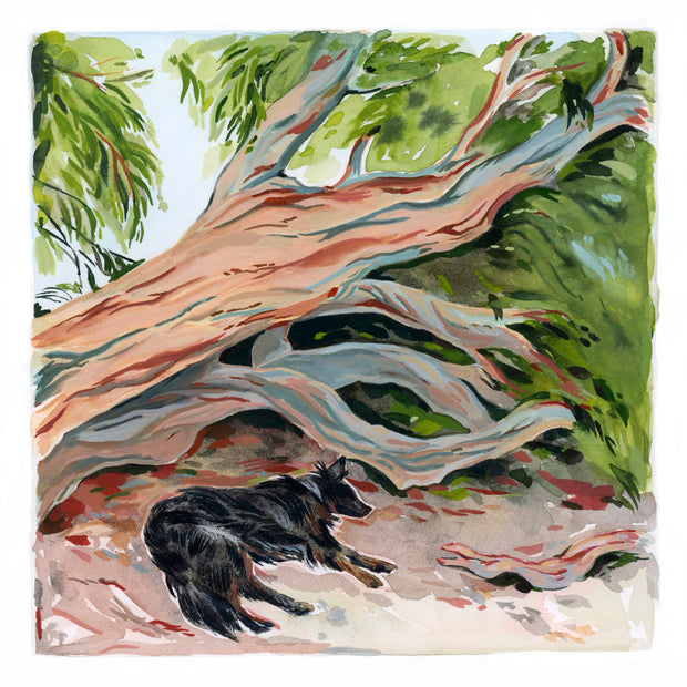 "Doggo Show 2 - Sarah Pinner - ""Under the Eucalyptus"""