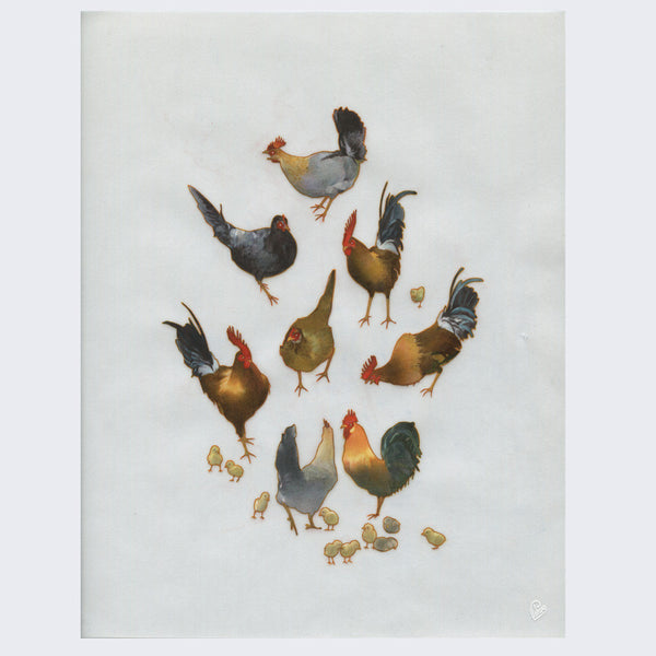 Edwin Ushiro - Wild Chickens - #9 - on HOLD