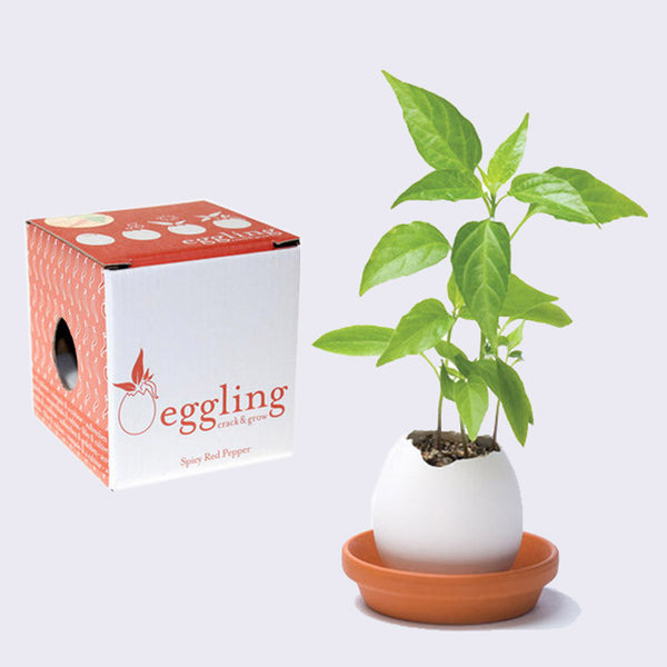 Eggling - Pepper
