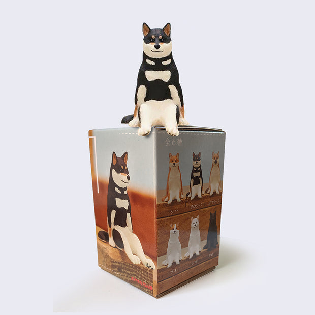 Sitting Dog Blind Box