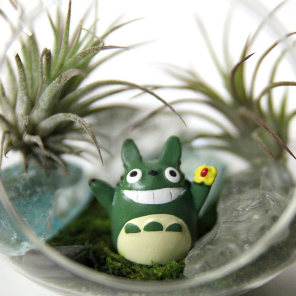 Totoro Air Plant Small Terrarium (Assorted)