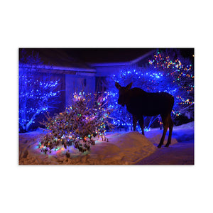 Christmas Night Moose Postcard