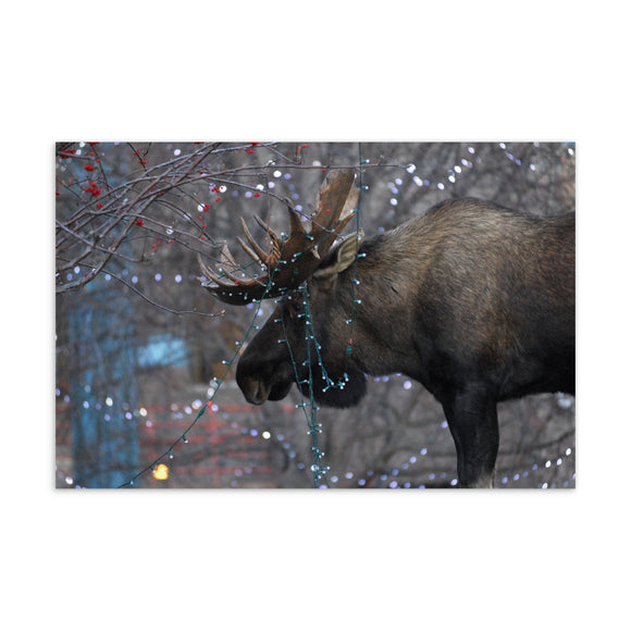 Christmas Lights Moose Postcard