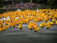 Rubber Ducky Race Fundraiser