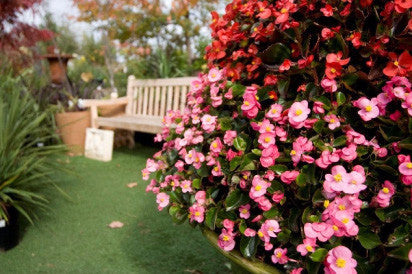 Garden of Eden Nursery Gift Voucher