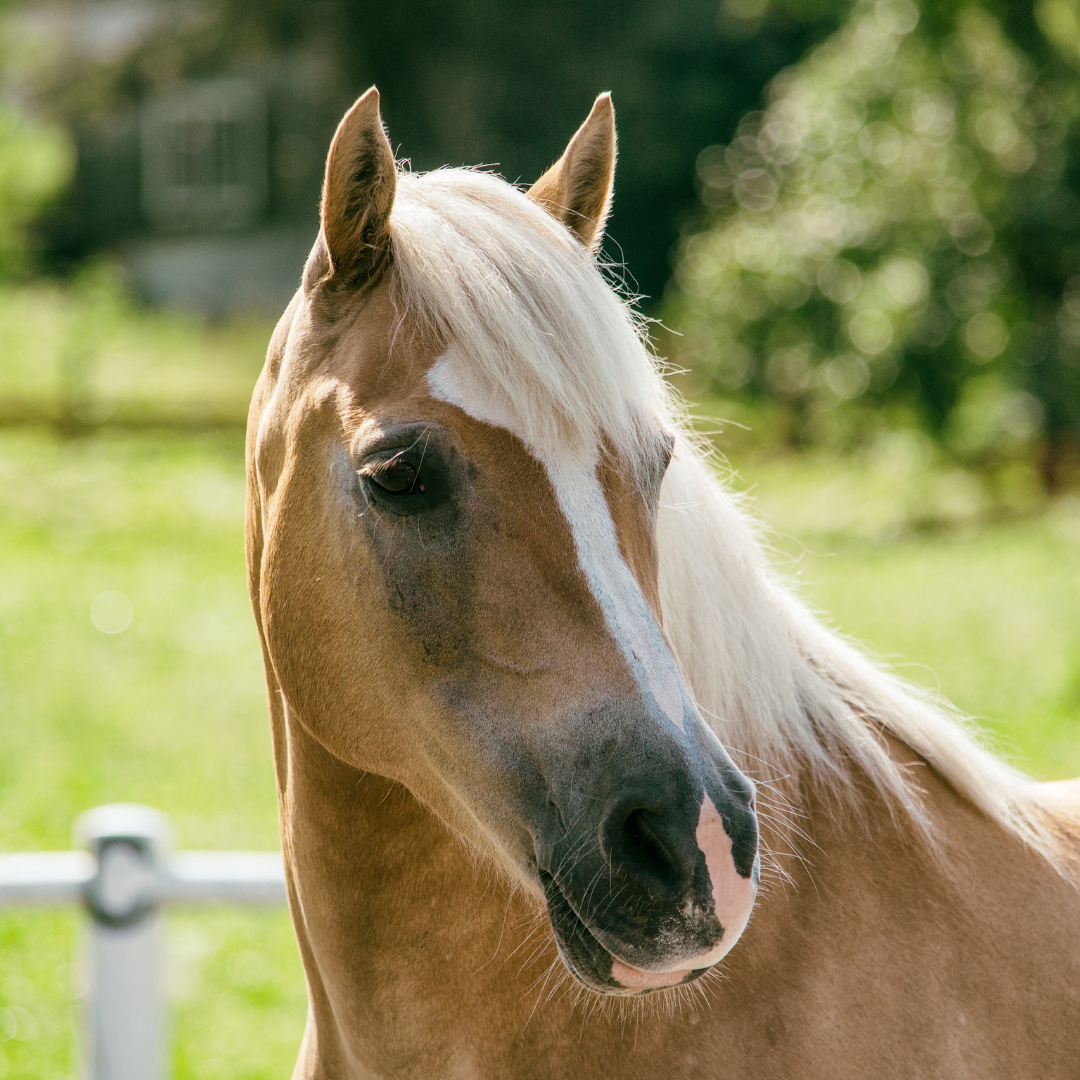 Top tips for a healthy mane & tail