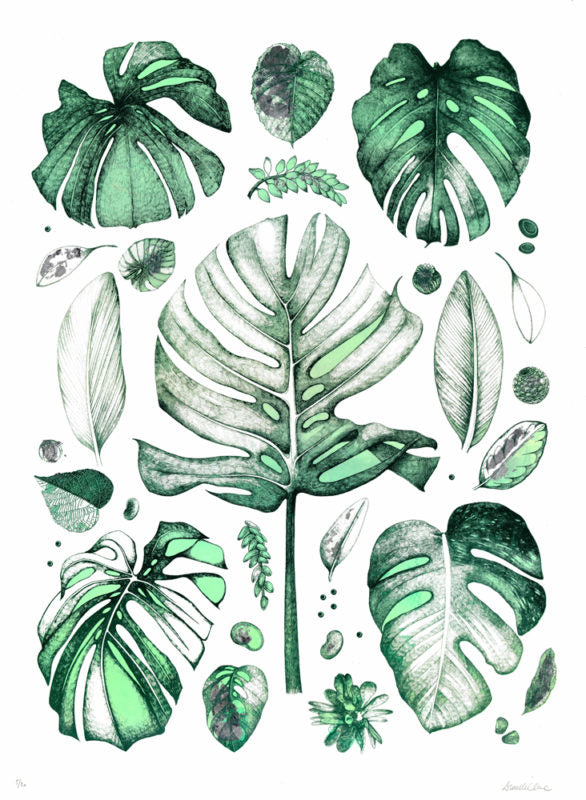 Lucille Clerc Tropical Leaves Outline Editions Vector leaf, outline drawing in vintage style. tropical leaves