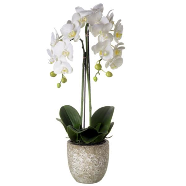 Potted Faux Phalaenopsis Orchid - 590Mm