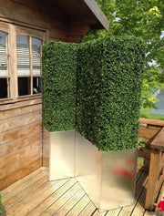 Boxwood Hedge - Any Size - Any Shape
