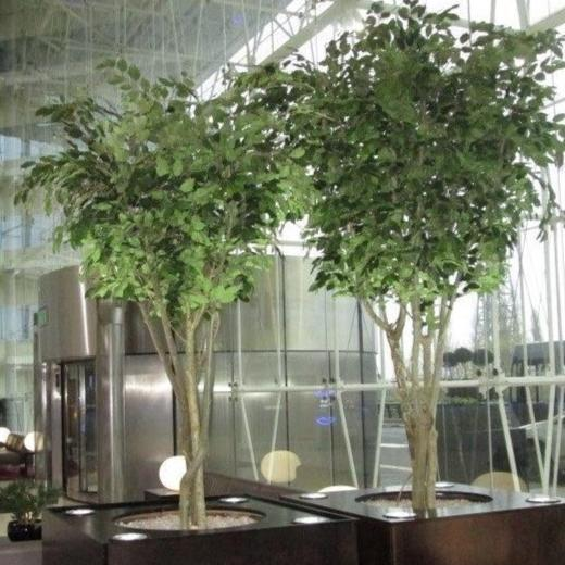 Artificial Ficus Tree Extra Large 3000mm *Special Order*