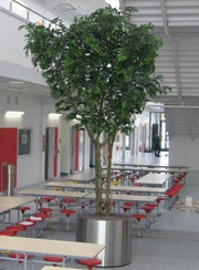 Artificial Ficus Tree Extra Large - with Stainless Steel Planter   *Special Order*