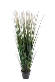 Onion Grass With Pot 110cm